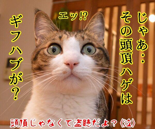 パパン、ギフハブに…… 猫の写真で4コマ漫画 4コマ目ッ