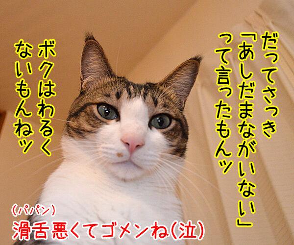 明日、ママがいない? 其の一 猫の写真で4コマ漫画 4コマ目ッ