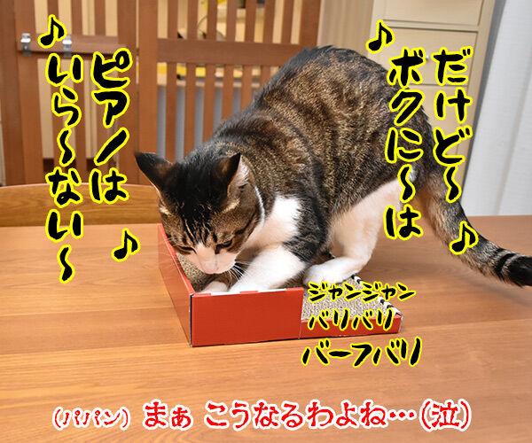 ねこのきもちの付録は『カリカリ 爪とぎ ねこピアノ』なのッ 猫の写真で4コマ漫画 4コマ目ッ