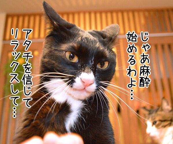 Dr.だいず 猫の写真で4コマ漫画 2コマ目ッ
