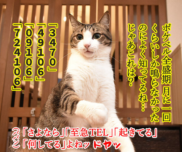 ポケベルが鳴らなくて ポケベルのサービスが終了しちゃったのよッ 猫の写真で4コマ漫画 3コマ目ッ