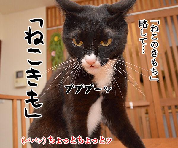 「ねこのきもち」まだぁ? 猫の写真で4コマ漫画 2コマ目ッ