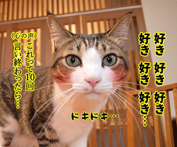 「好き」って10回言ってみてッ 猫の写真で4コマ漫画 2コマ目ッ