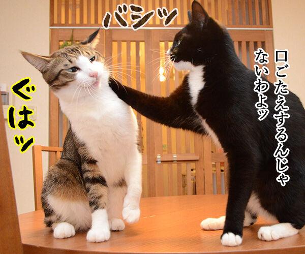 あずだいテレビ小説『おかあちゃん』 猫の写真で4コマ漫画 2コマ目ッ