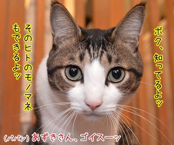 パナマ文書に載ってる日本人の名前は? 猫の写真で4コマ漫画 3コマ目ッ