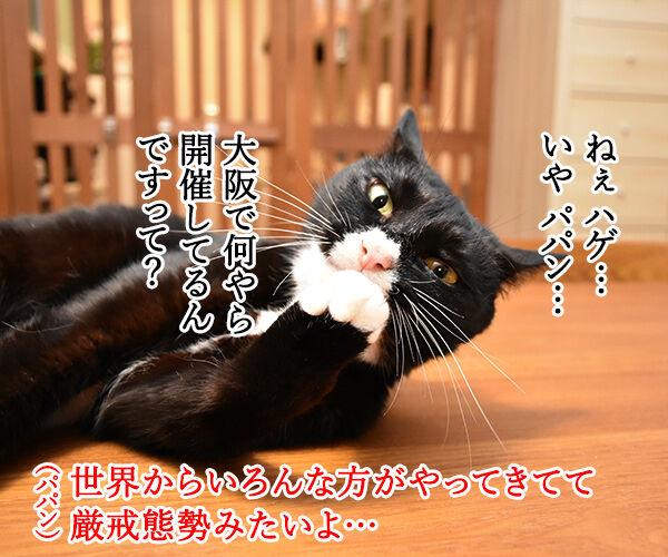大阪で何やら開催してるらしいのよッ 猫の写真で4コマ漫画 1コマ目ッ