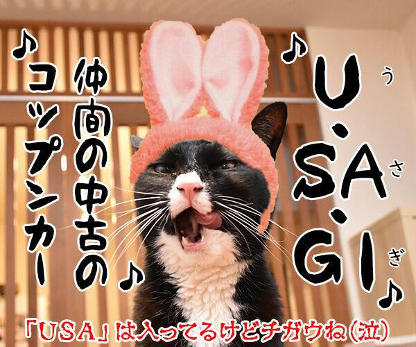 DA PUMPのU.S.Aはダサかっこいいのよッ 猫の写真で4コマ漫画 4コマ目ッ