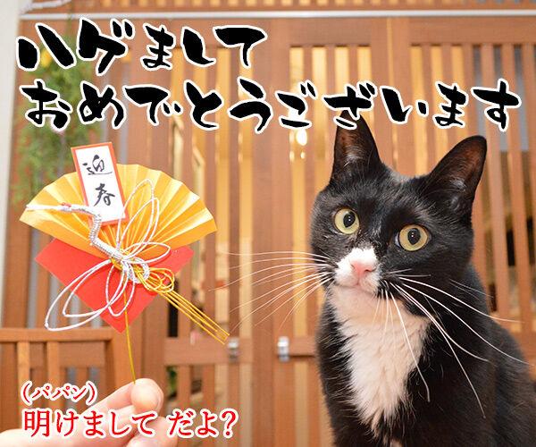 元旦だから新年のご挨拶なのッ 猫の写真で4コマ漫画 1コマ目ッ