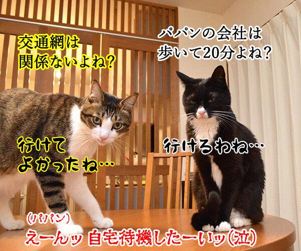 東京も大雪なんですってッ 猫の写真で4コマ漫画 4コマ目ッ