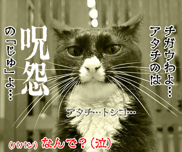 「はい」じゃなくて「りょ」じゃなくて 猫の写真で4コマ漫画 4コマ目ッ