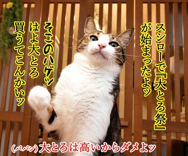 スシローで『大とろ祭』が開催中なのよッ 猫の写真で4コマ漫画 1コマ目ッ