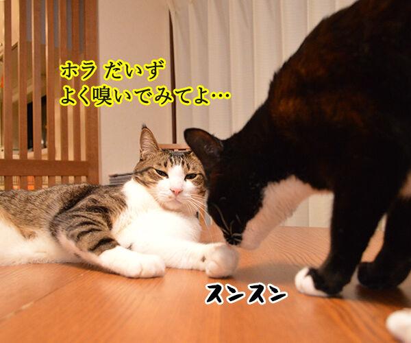 ボクのおててはクサクない 猫の写真で4コマ漫画 1コマ目ッ