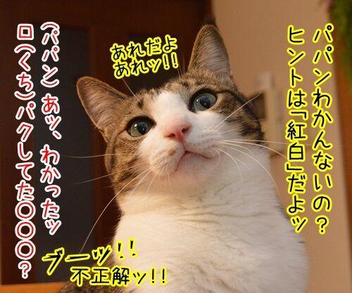 モノマネ当てクイズ 猫の写真で4コマ漫画 3コマ目ッ