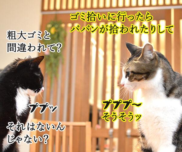 きょうは、ごみゼロの日 猫の写真で4コマ漫画 3コマ目ッ