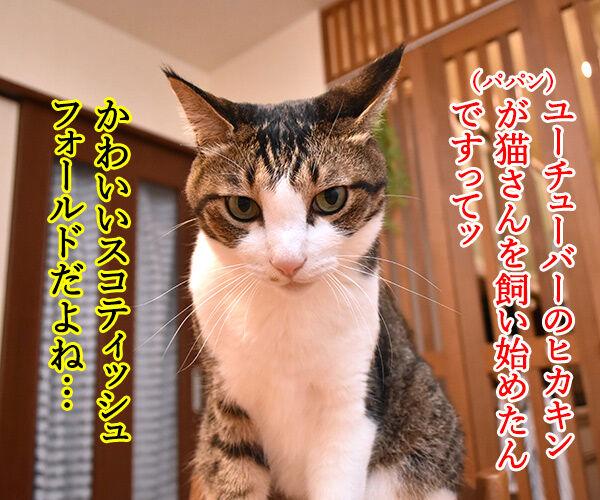 あのヒトが猫を飼い始めたんですってッ 猫の写真で4コマ漫画 1コマ目ッ