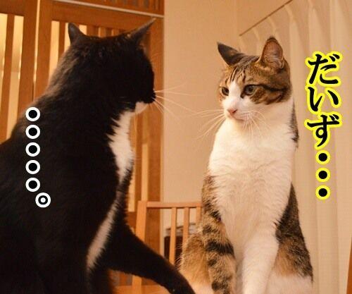 ナツカCM 其の一 猫の写真で4コマ漫画 2コマ目ッ