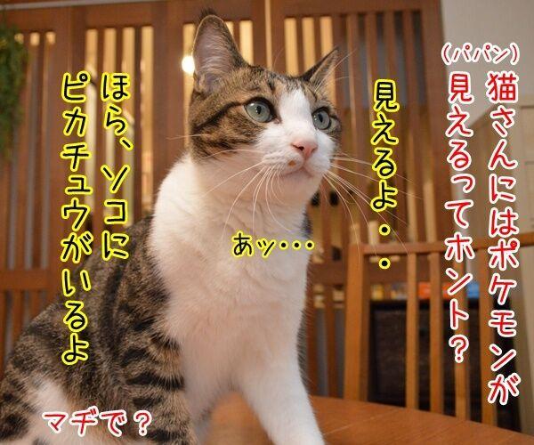 猫さんにはポケモンが見えるんですってッ 猫の写真で4コマ漫画 1コマ目ッ