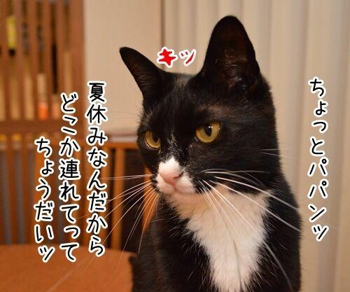 夏休みだから 猫の写真で4コマ漫画 1コマ目ッ