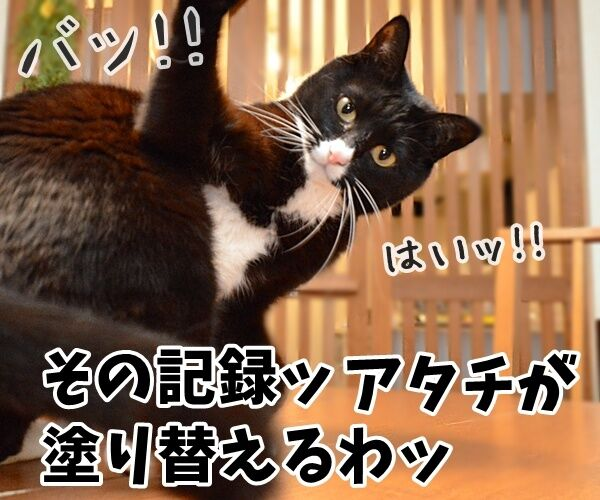世界最長寿の猫Scooterさんが永眠 30歳でした 猫の写真で4コマ漫画 2コマ目ッ
