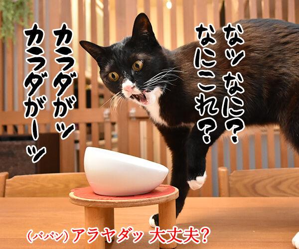 ロイヤルカナンは美味しいけど… 猫の写真で4コマ漫画 3コマ目ッ