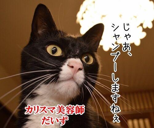 シャンプー 猫の写真で4コマ漫画 1コマ目ッ