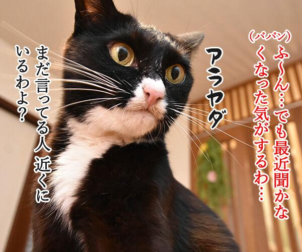 花火が上がった時の掛け声ってどんなだっけ? 猫の写真で4コマ漫画 3コマ目ッ