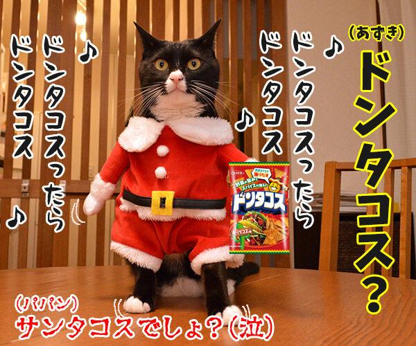 そろそろクリパをはじめましょうか 猫の写真で4コマ漫画 4コマ目ッ