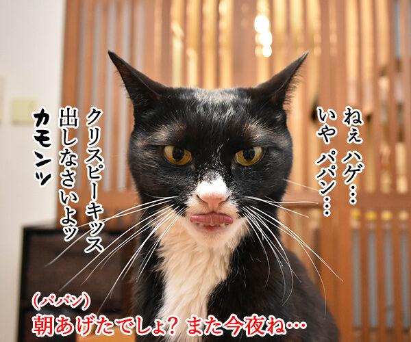 オヤツは今夜じゃイヤなのよッ 猫の写真で4コマ漫画 1コマ目ッ