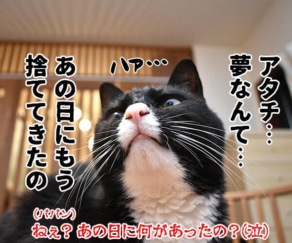天赦日だから年末ジャンボを買ったのよッ 猫の写真で4コマ漫画 4コマ目ッ