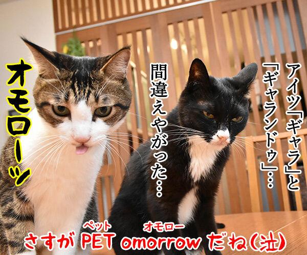 PETomorrowはオモローッ 猫の写真で4コマ漫画 4コマ目ッ