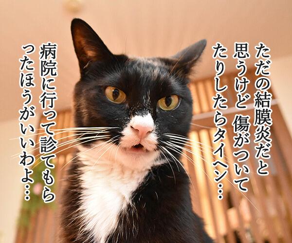 目がゴロゴロしてるのよッ 猫の写真で4コマ漫画 2コマ目ッ