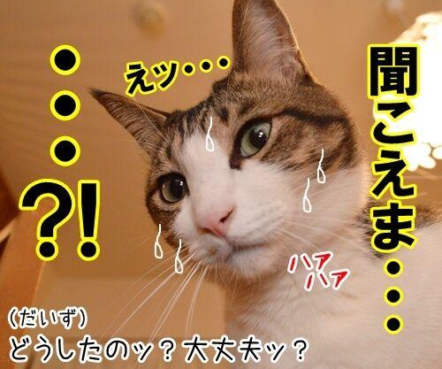 大きな声で呼びかけてッ 猫の写真で4コマ漫画 3コマ目ッ