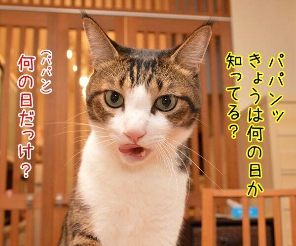 10月20日きょうは何の日? 猫の写真で4コマ漫画 1コマ目ッ
