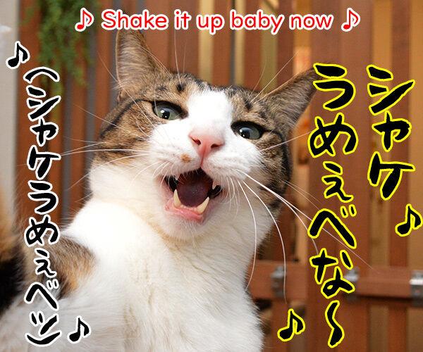 今日はロックの日だからシェケナベイベー 猫の写真で4コマ漫画 3コマ目ッ