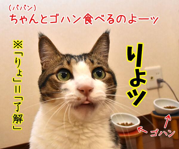 「はい」じゃなくて「りょ」じゃなくて 猫の写真で4コマ漫画 1コマ目ッ