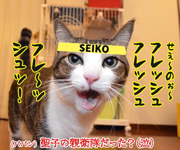 夏の扉 猫の写真で4コマ漫画 4コマ目ッ