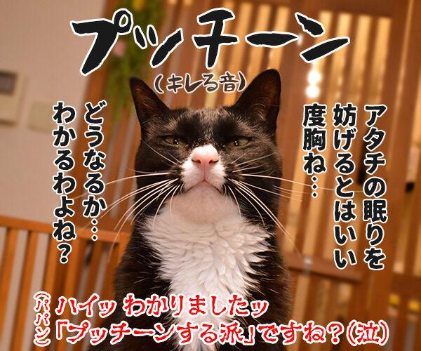 プッチン「する派」「しない派」 あなたはどっち? 猫の写真で4コマ漫画 4コマ目ッ
