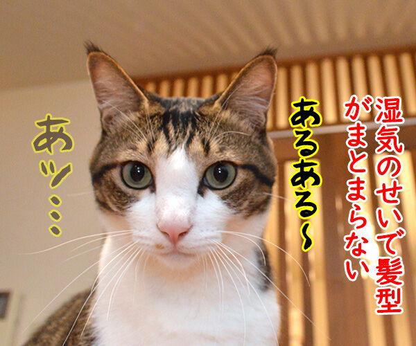 梅雨あるある 猫の写真で4コマ漫画 3コマ目ッ