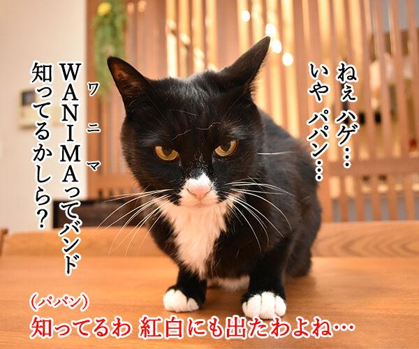 WANIMAってバンド 知ってる? 猫の写真で4コマ漫画 1コマ目ッ