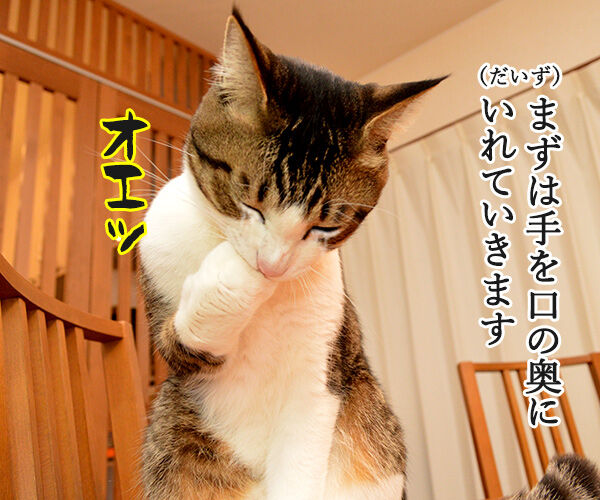 猫さんが誤飲してしまったら…? 猫の写真で4コマ漫画 2コマ目ッ