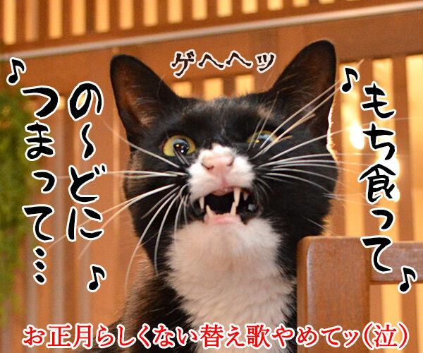 お正月にするコト 猫の写真で4コマ漫画 4コマ目ッ