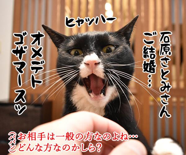 石原さとみさん ご結婚オメデトゴザマース♥ 猫の写真で4コマ漫画 1コマ目ッ