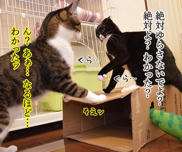 ゆらさないでッ 猫の写真で4コマ漫画 1コマ目ッ