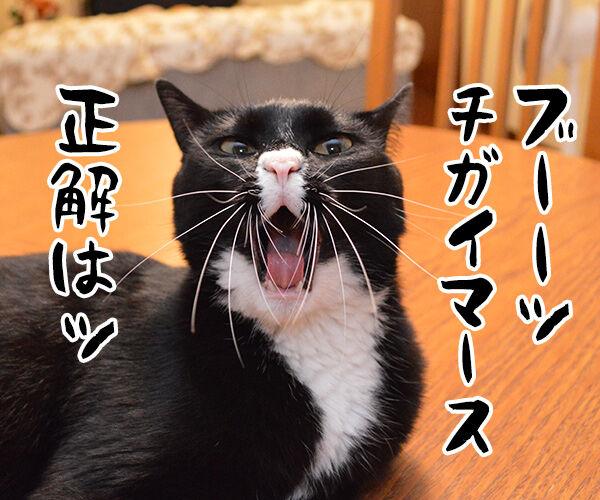 今日は何の日でしょうかッ? 猫の写真で4コマ漫画 3コマ目ッ