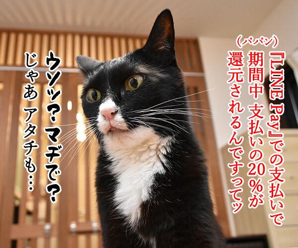 LINE Payも20%還元キャンペーンなんですってッ 猫の写真で4コマ漫画 3コマ目ッ