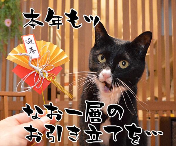 元旦だから新年のご挨拶なのッ 猫の写真で4コマ漫画 3コマ目ッ