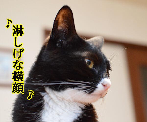 君だけを見ていた 猫の写真で4コマ漫画 2コマ目ッ