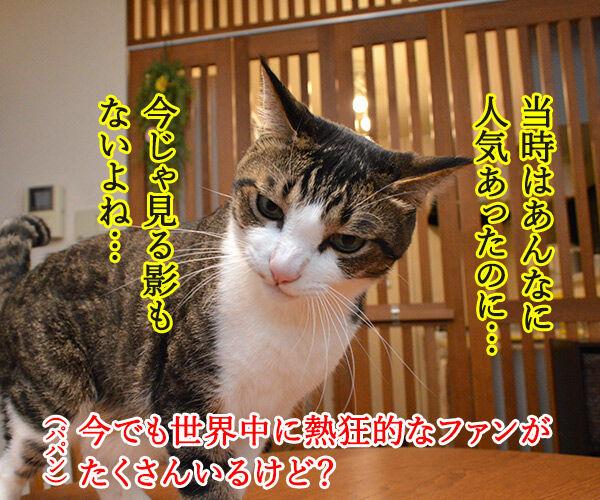 6月29日はビートルズ記念日なんですってッ 猫の写真で4コマ漫画 3コマ目ッ