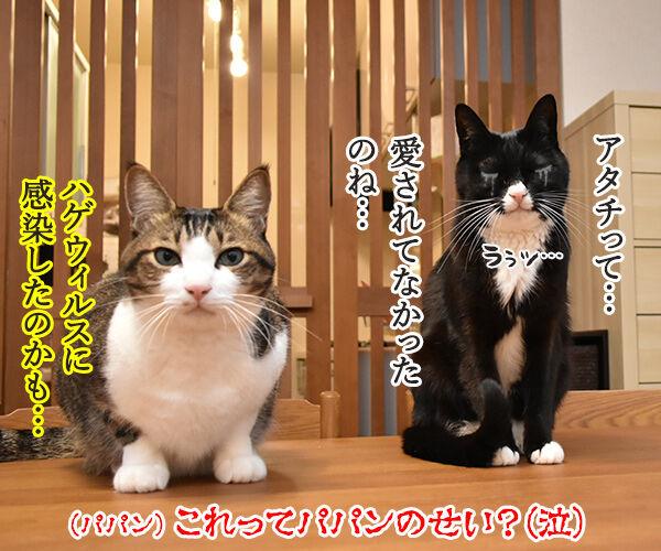 愛情を受け続けた猫ちゃんがとってもかわいくなったんですってッ 猫の写真で4コマ漫画 4コマ目ッ