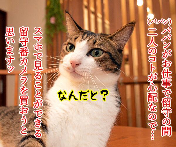 あなたが留守の時 ペットは何してる? 猫の写真で4コマ漫画 1コマ目ッ